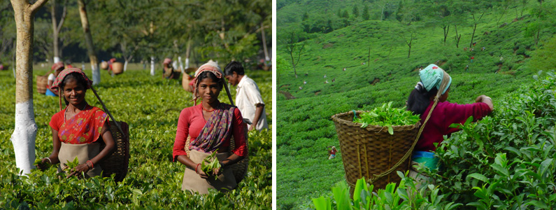 list of Top 10 Tea Exporting Countries