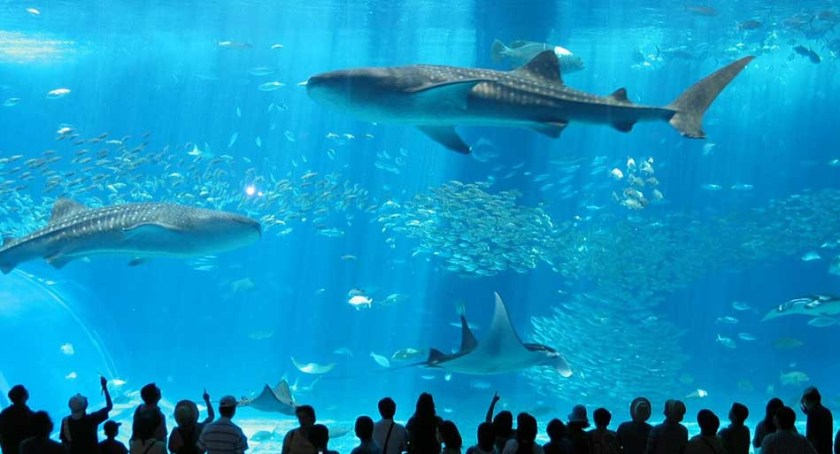 Top Ten Most Amazing and Best Aquariums in the World