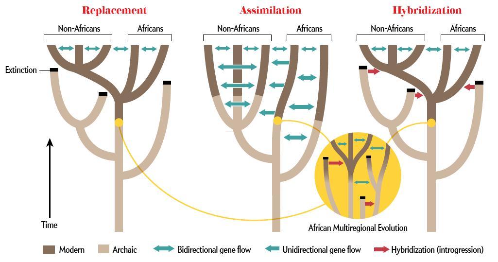 Scientific American Human Hybrids