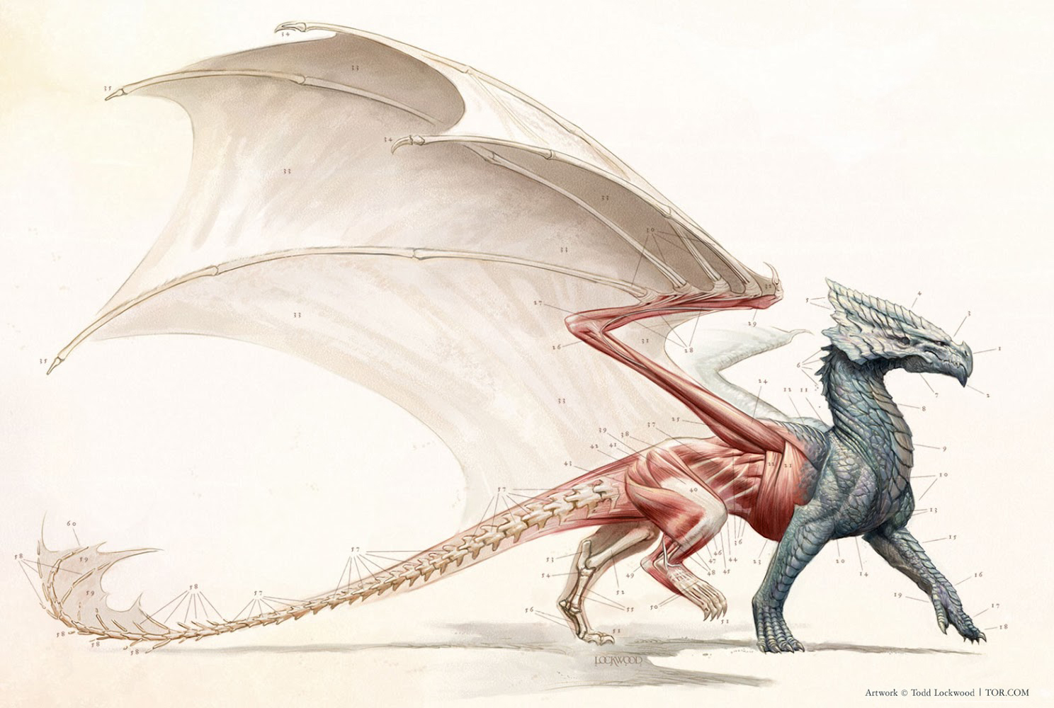 Todd Lockwood, Natural History of Dragons