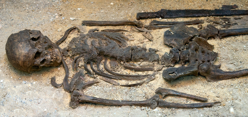 The remains of the real Richard III, excavated in 2012.