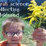 Torah Science – goldenrod
