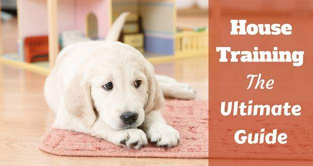 House Training Guide For A Puppy Or Dog Of Any Age