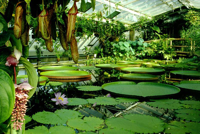 Botanischer Garten und Botanisches Museum (Botanic Gardens - haus und garten