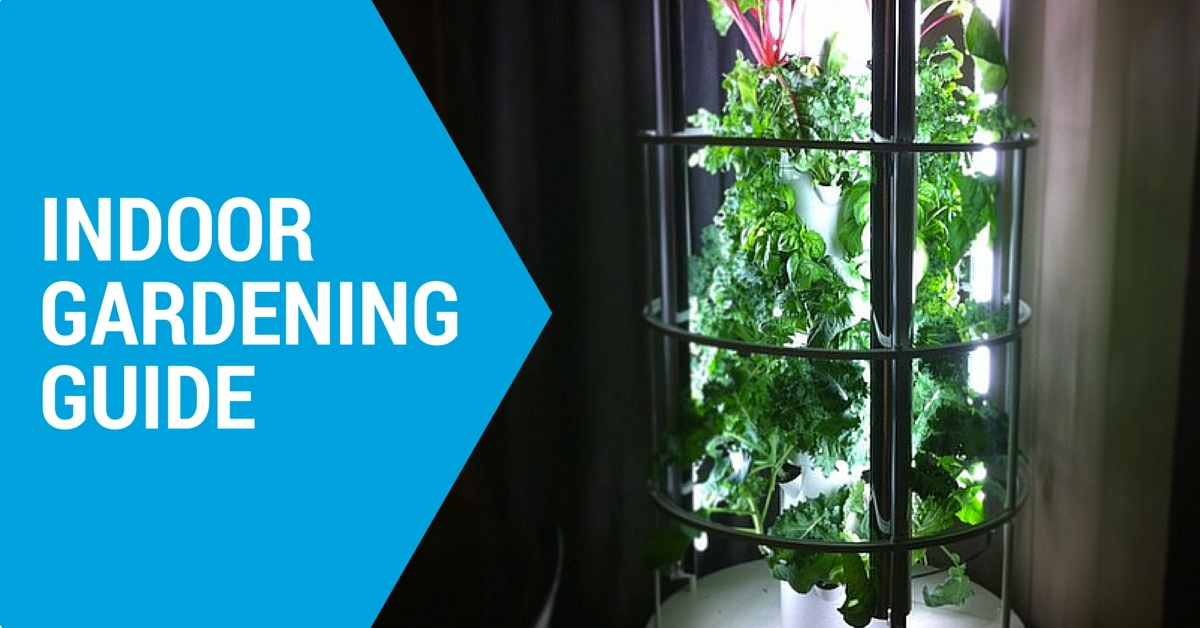 Everything You Need to Know About Indoor Gardening