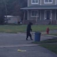New Jersey Bear Strolls Through Neighborhood On Two Legs: VIDEO