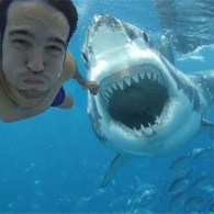 Fake Pete Wentz Shark Attack Selfie Fools The Internet
