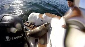 seal orcas