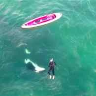 A Kayaker Just Had a Very Close Encounter with Wild Orcas — He Swam With Them