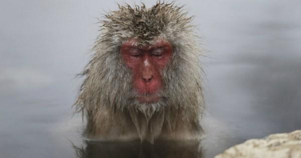 cold monkey