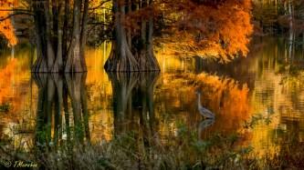 Autumn at Stumpy Lake