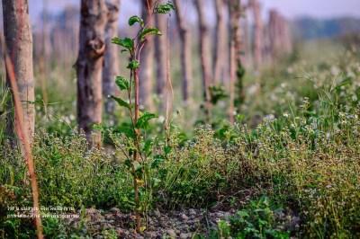 ค้างในไร่เสาวรส Passion Fruit Field