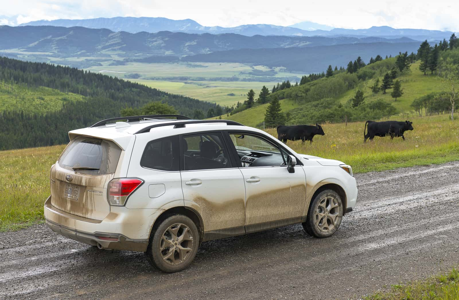 first drive new 2017 subaru forester explores the cowboy trail. Black Bedroom Furniture Sets. Home Design Ideas
