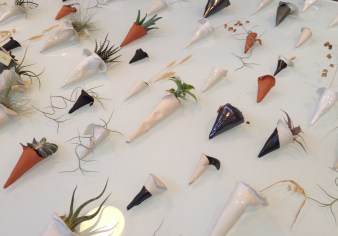 Cones and airplants - Tracy Muirhead