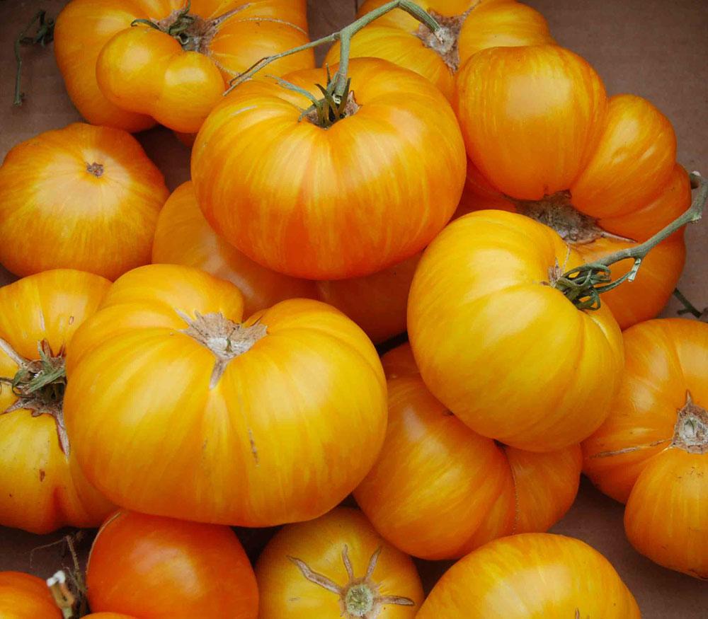 big beef tomato solanum lycopersicum big sungold tomato solanum