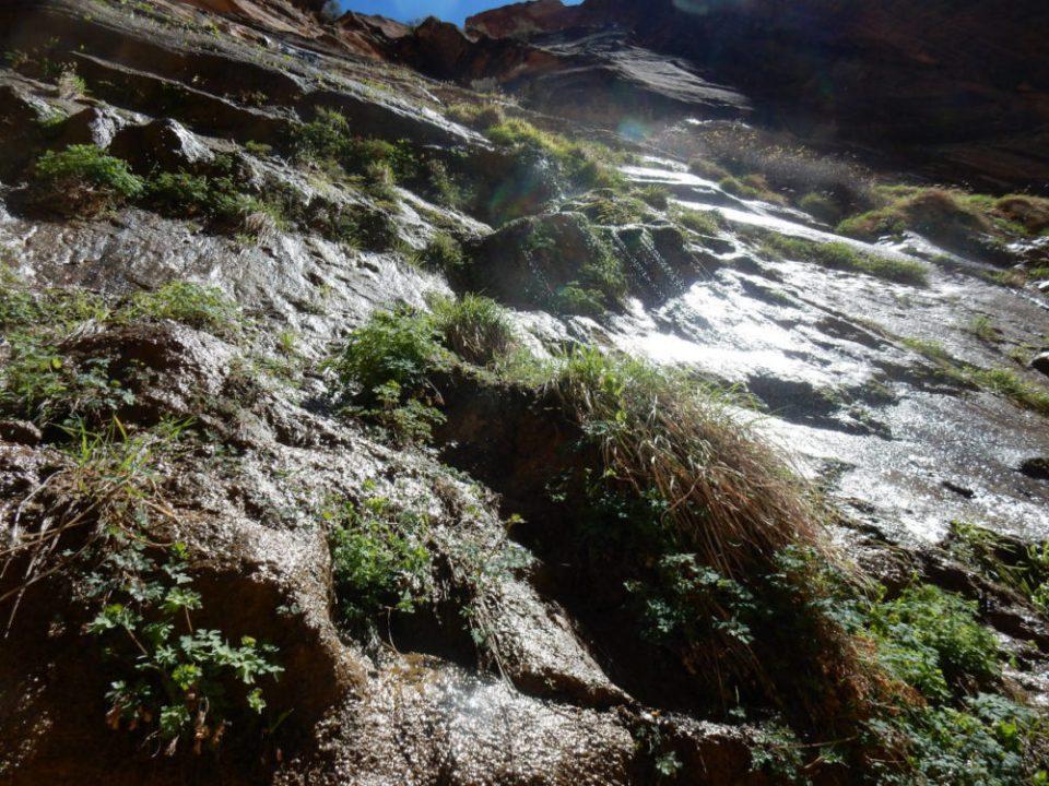 Zion Hanging Garden on Glistening Cliffs