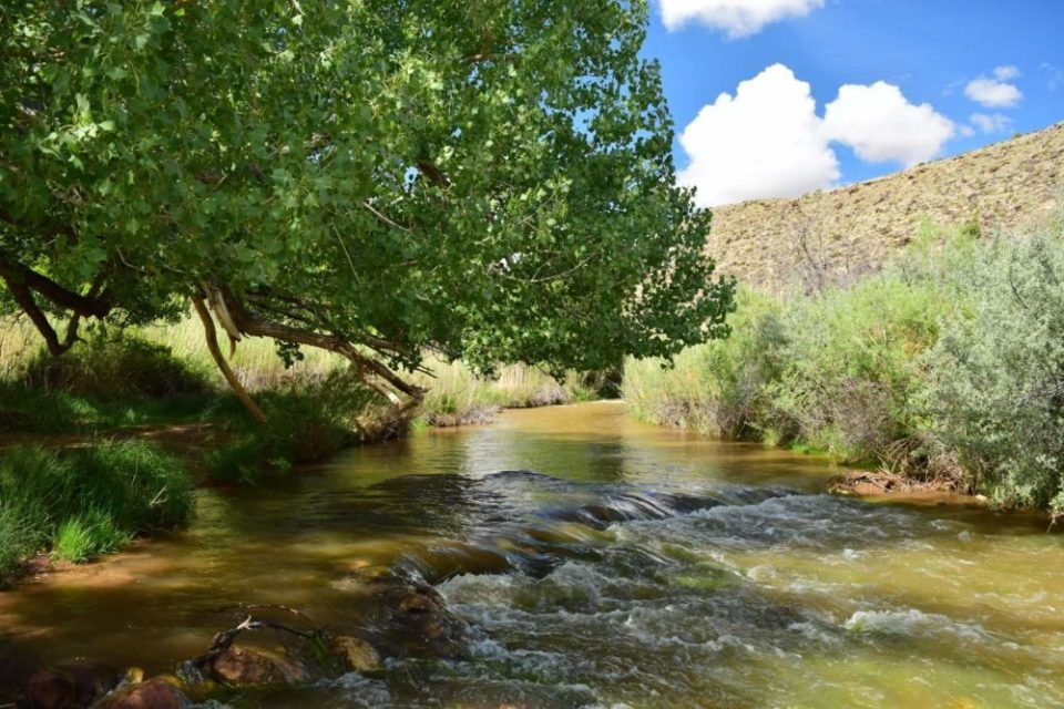 The Fremont River- Notice the silty green water