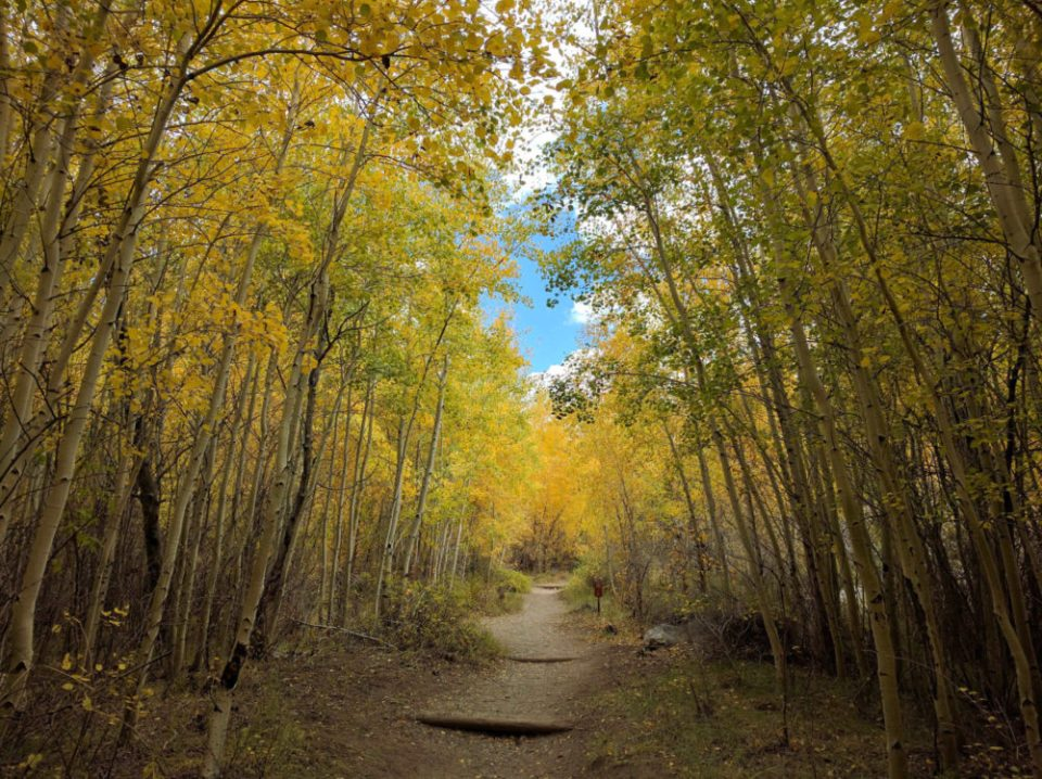 Mosca Trail Aspen