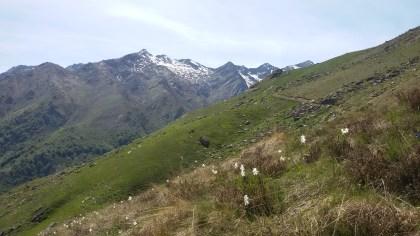 Verso l'alpe Moriondo