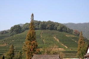Dragon Well Tea Plantation Hangzhou, China