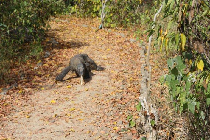 Chasing Dragons on Komodo Island