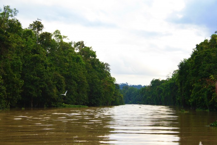 The Kinabatangan River: A Cruise To The Heart Of Darkness