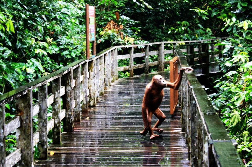 These Photos Will Inspire You To Travel To Sabah!
