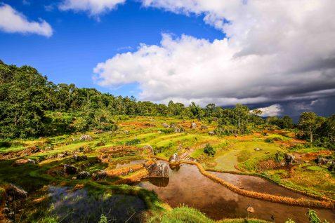 Rice padis in the tropical sun in Toraja