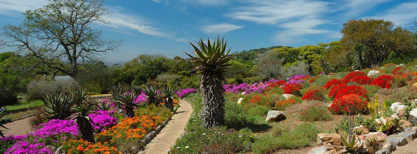 Victoria Falls Wallpaper Kirstenbosch Botanical Gardens Cape Town