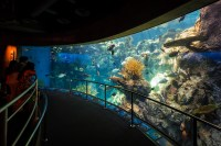 Aquarium Pacific Long Beach California | The best beaches ...