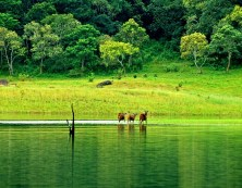 thekkady-wildlife-kerala-india+1152_13047417214-tpfil02aw-13373
