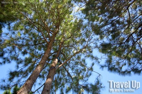 sierra madre hotel & resort trees