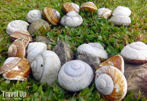 jariels peak infanta quezon snails