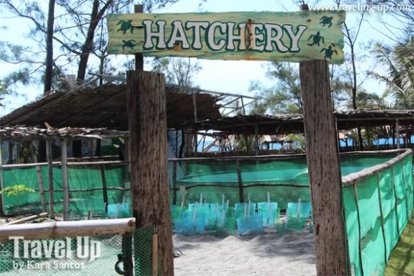 bataan pawikan conservation center hatchery