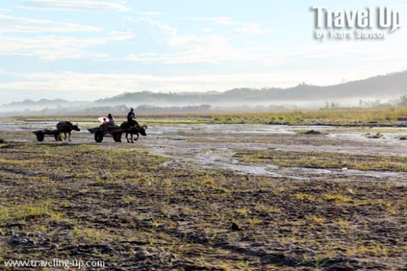 mt. pinatubo carabao locals caravan