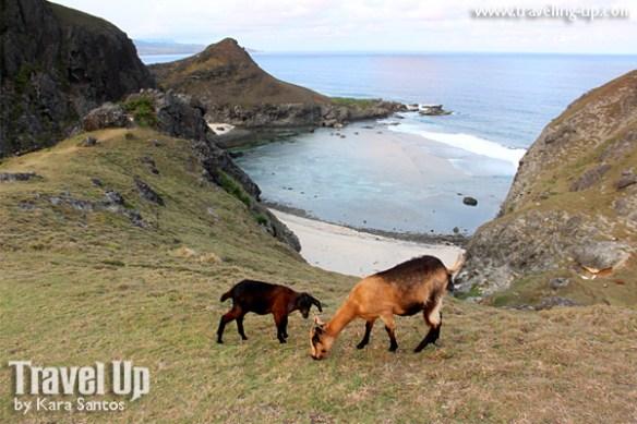 sabtang island batanes chamantad tinyan viewpoint goats