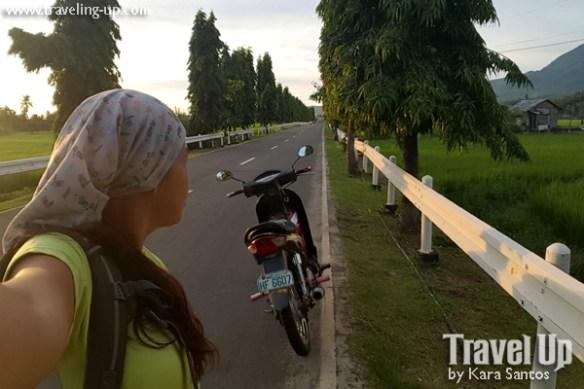 25-trees-on-road-biliran