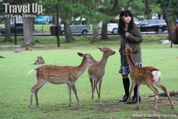 japan-nara-deer-park