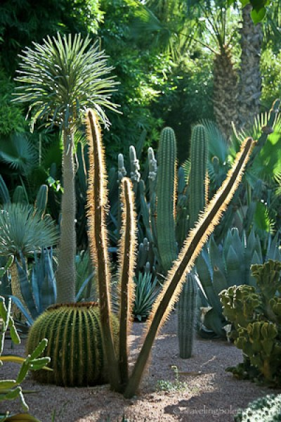 Plants in Majorelle Garden in Marrakech