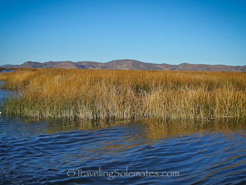 Totora Reeds on Lake Titicaca