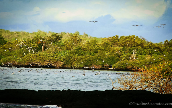 Landscape of Isabela in Galapagos islands