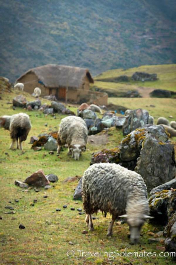 Village on Lares Valley Trek Peru