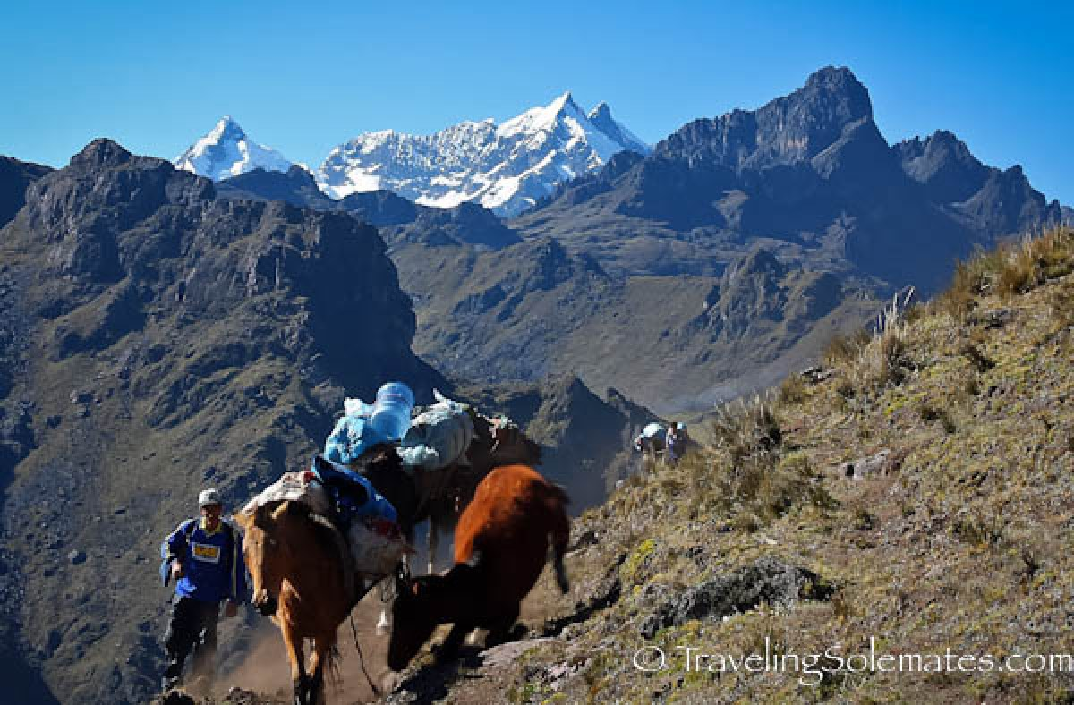 Horses on Lares Valley Trek Peru