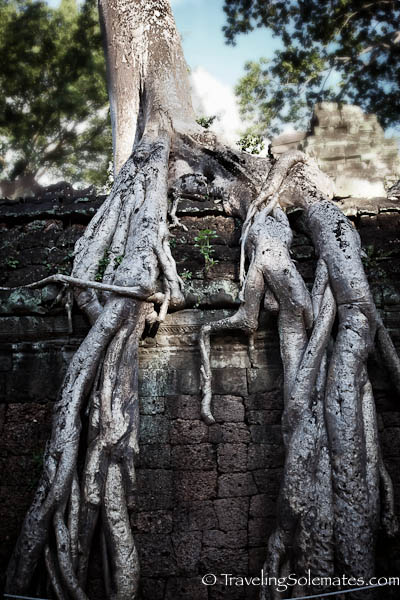 Giant tree roots in Ta Prohm Temple, Angkor, Cambodia