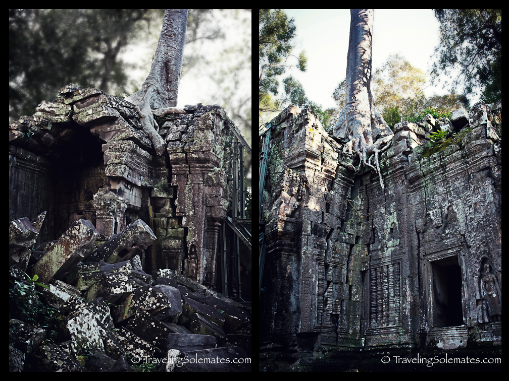 Trees and Ruins of Ta Prohm Temple, Angkor, Cambodia