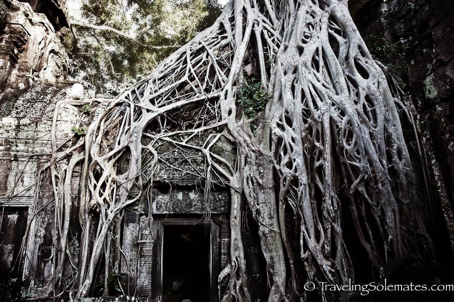 Giant Roots inTa Phrom Temple, Angkor, Cambodia