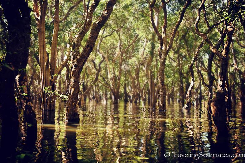 Flooded Forest, Kompong Phluk, Tonle Sap, Cambodia