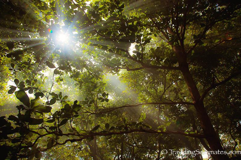 Sun Rays, Calibishie, Dominica