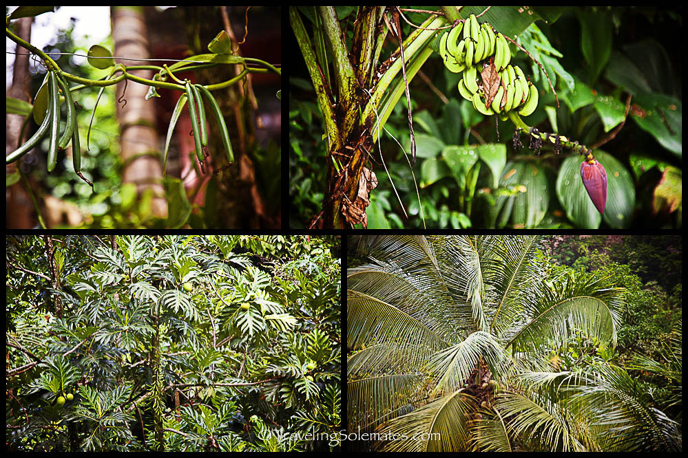Vegetations in Cocoa Cottage, Roseau Valley, Dominica