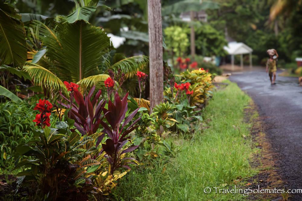 Waitakabuli Trail, Segment 6, Kalinago Territory, Dominica